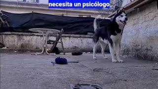 Video de perrito que habla