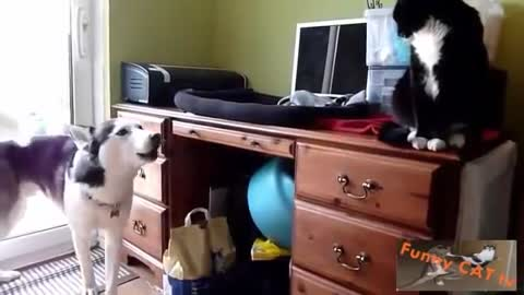 Cats and Dogs Meet at the house