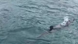 Surfing with Some Dolphins in Tobago
