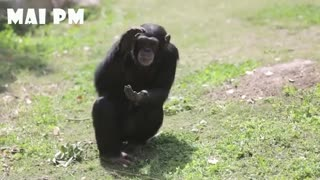 Funny pet video/so funny