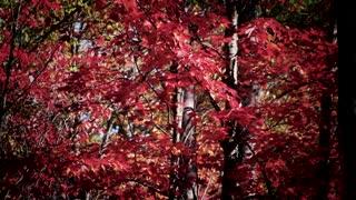 Autumn in Jackson
