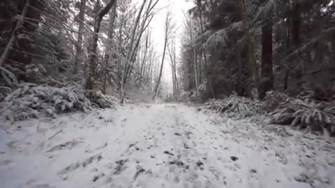 Walking in the forest in the winter