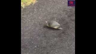 How this Turtle escape from cop Funny moment