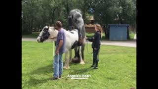 Horse have never seen..