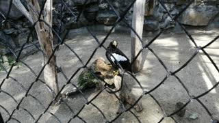 Beautiful eagle at the zoo.