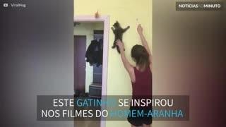 """""""Gato Aranha"""": gatinho escala parede para alcançar brinquedo"""