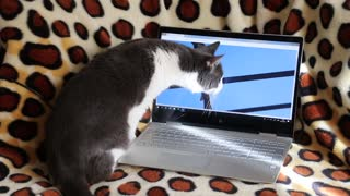 Funny Cat Trying To Catch Bird From The Laptop