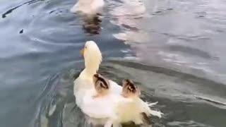 This cute animals just blown my mind