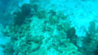 Cancun Mexico Carribean Scuba Diving Part 9