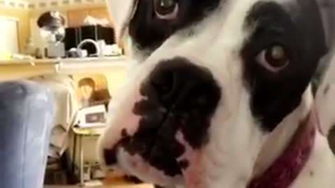 Dog is confused with weird noise