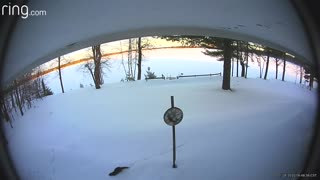 Fun-loving otter slides through backyard snow on security camera