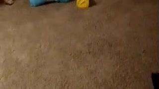 German Shepherd - Helps carry into house