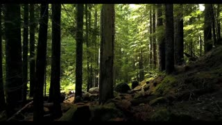 FOREST   DRONE FOOTAGE
