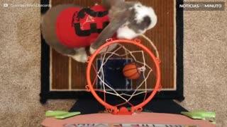 Conheça Bini, um coelho craque no basquete