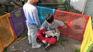 Spencer petting bunnies at fall festival - VID_20201010_102855