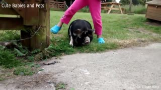 Funniest Animal Chases - 1