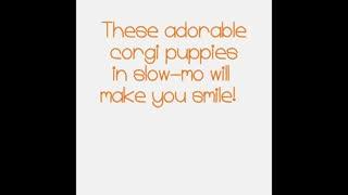 Cute puppies 😜