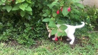 A White Kitten Playing!!