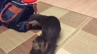 Otter VS Otter