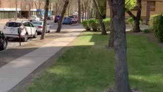 Police Harassment of Freedom Fighters in Victoria Park in Regina