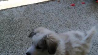 Angry doggy