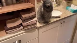 The cat throws the towels on the floor