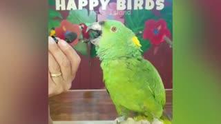 Watch hilarious parrot singing