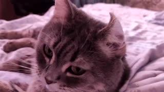 Inverted cat ear. December 2019