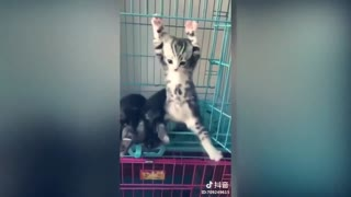 TikTok Funny Cats Compilation