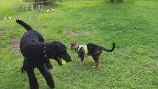 Adorable Dogs and Cats Playing together while fighting