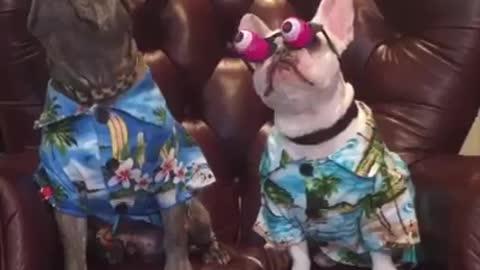 Amazing dogs reaction