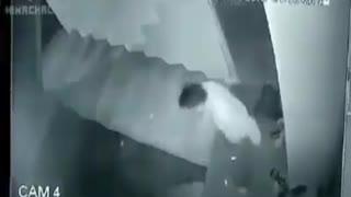 Leopard attacks Dog