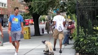 Man Pulls Dog On Skateboard In New York City