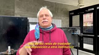 [Video] ¿Qué pasa con los peces cuando se cierran los acuarios?