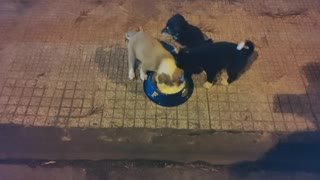 Feeding Stray Puppies #1