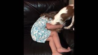 Puppy loves to tickle toddler best friend