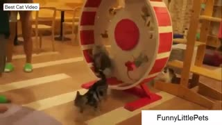 Cute Excising Cats