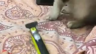 Cute cat freaking out!