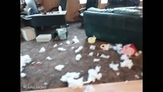 TwO Dogs so Busted!.