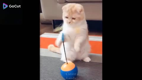 Animals most funny video