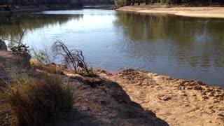 Kangaroo Takes a Swim Across River