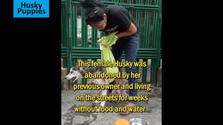 Starving sick dog rescued by animal lover 1000000 1 million views on YouTube