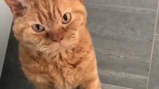 very very beautiful, charismatic cat