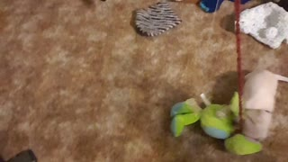 Owner of Needy Puppy Finds Creative Way to Workout