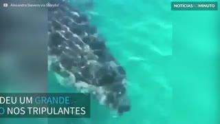 Tubarão de 5 metros persegue tripulantes de barco