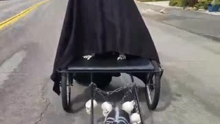 Terrifying dog shows off his epic Halloween costume