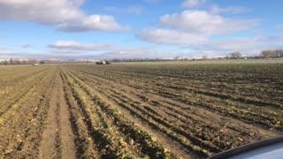 Sugarbeet Harvest 2020