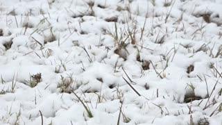 Córdoba, en Argentina, se cubre nieve por primera vez en 14 años