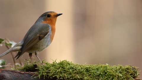 Most Beautiful Birds on Earth