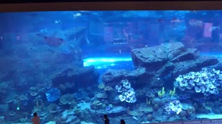 World's largest aquarium